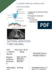 Desarrollo Sistema Nervioso Central S5