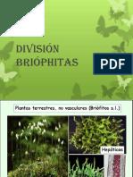 División Briophitas