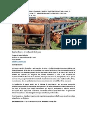 dieta para ganado bovino engorda pdf