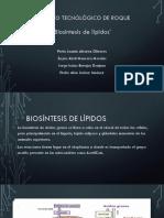 biosintesis de lipidos.pptx
