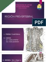 Region Prevertebral EXPOSICION