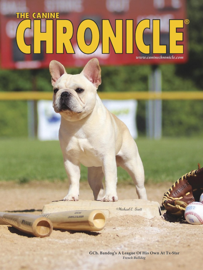 Canine Chronicle   Conformation Show   American Kennel Club