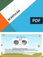 Blastulasi