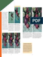 Reves-lessonssoftpastel_Flower.pdf