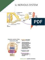 Peripheral Nervous System Print