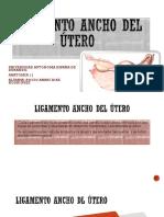 Ligamento ancho del utero