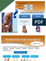 Anatomia Generalidades Introduccion