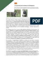 Dia Mundial Del Lemur Desde Madagascar