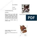 Nombre Cientifico Allophylus Floribundus