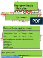 B2 Photosynthesis.pptx