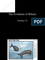Whales (1)