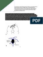 hukum Goodsall membantu mengantisipasi anatomi fistula perianal.docx