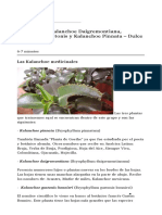 Kalanchoe – Kalanchoe Daigremontiana_ Kalanchoe Gastonis y Kalanchoe Pinnata – Dulce Revolución