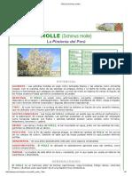 MOLLE (Schinus Molle)