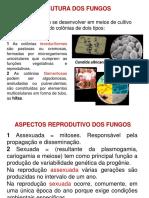Apresentação 2 Reprodução ATUALIZADO.pdf