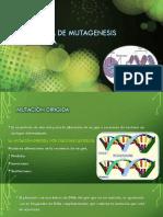 Tecnica de Mutagenesis Dirigida