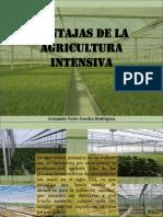 Armando Nerio Guedez Rodríguez - Ventajas de La Agricultura Intensiva