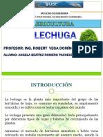 CULTIVO DE LECHUGA.pdf