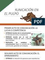 La Comunicación en El Pulpo