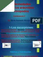 aracnidos2