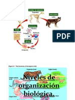 Clase Niveles de Organizacion de La Materia.
