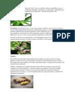 PLANTAS MEDICINALES BENEFICIOS Y USO