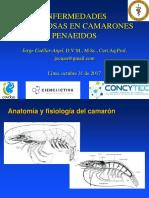 Enfermedades infecciosas en camarones - Dr. Jorge Cuéllar-Anjel - Lima, 2017.pdf