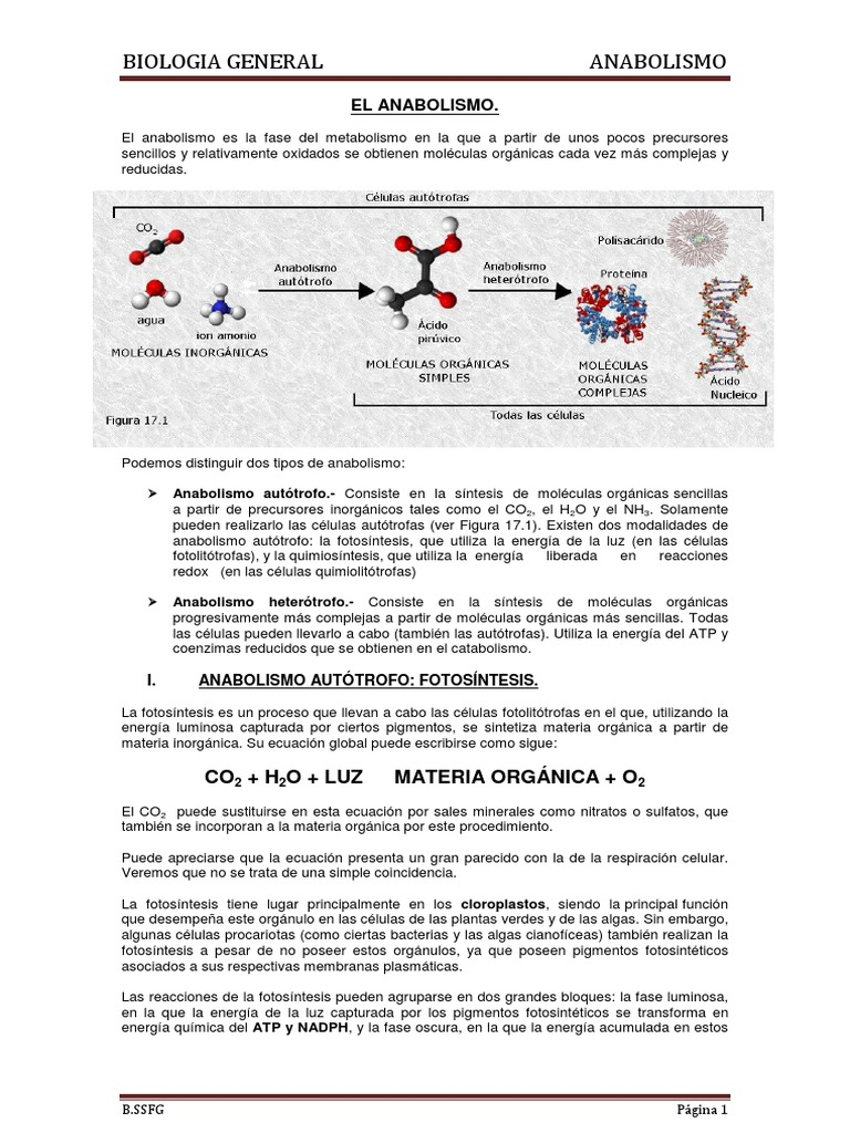 Lectura - Anabolismo - Fotosíntesis - Bioquímica