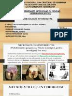 Necrobacilocis interdigital.pptx