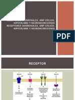 Receptores Hormonales%252c AMP Cíclico