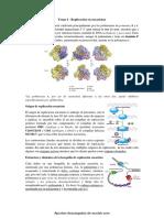 'wuolah-free-Tema 4 - Replicación en eucariotas.pdf'