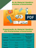 07organiza--o Do Material Gen-tico Nos Procariontes e Eucariontes (5)