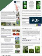 Spring 2010 Night Owls Newsletter Houston Audubon Society