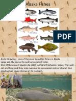 Alaska Fishes(1)