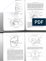 Anatomía Básica Del Cerebro-4a Parte