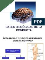 Bases biologicas de la conducta.pdf