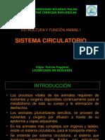4. Sistema Circulatorio (1)