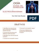 19a Sesión Estructura y Función Sistema Cardiovascular 1a parte