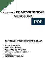 patogenia marilu