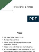 Algas Protozoarios e Fungos