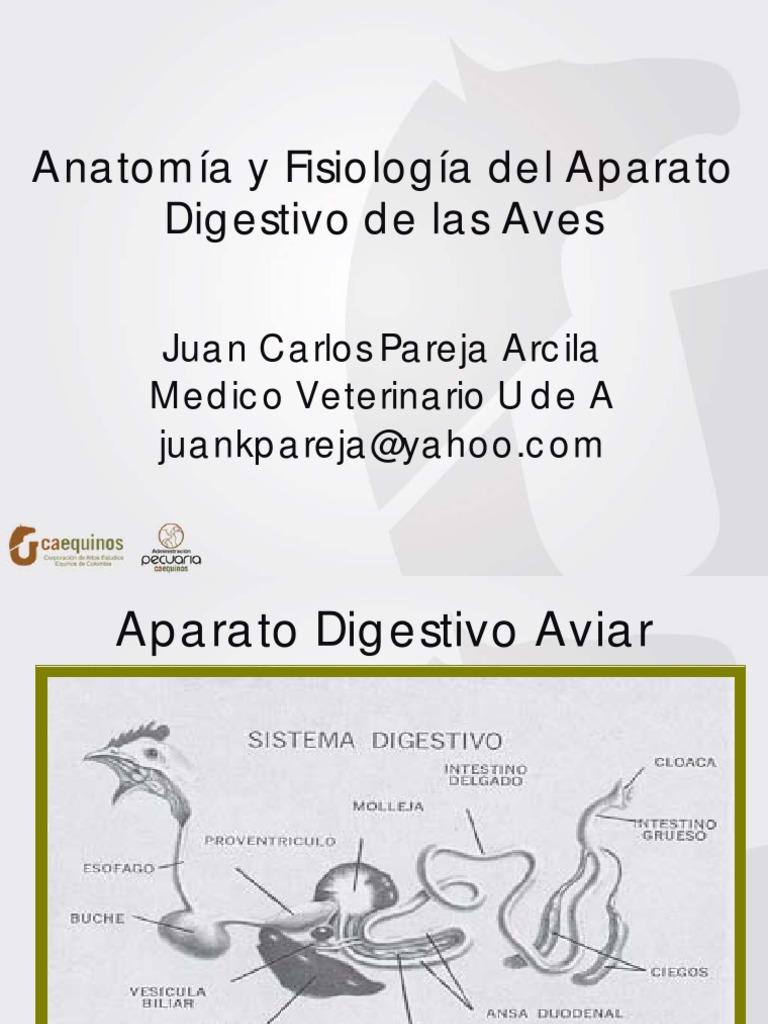 Anatomía y Fsiología Intestinal