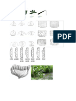 bentuk - morfologi