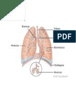 bagian tubuh manusia.docx