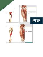 ossos.docx