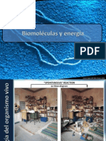 4.2. Metabolismo, Replicación, transcripción y Traducción