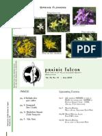 Jun 2008 Prairie Falcon Northern Flint Hills Audubon Society