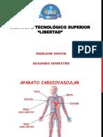 Organos Aparato Cardiovascular y Respiratorio