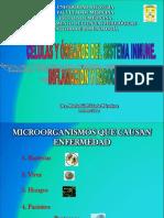 1 Células y Órganos Del Sist Inmuno Enero 2016
