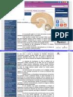 Asociacion Educar Nucleo-Accumbens