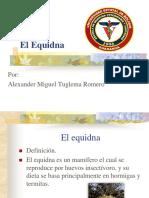 El Equidna